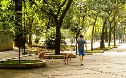 Tus hijos disfrutarán de los maravillosos espacios verdes del Parque Los Caobos