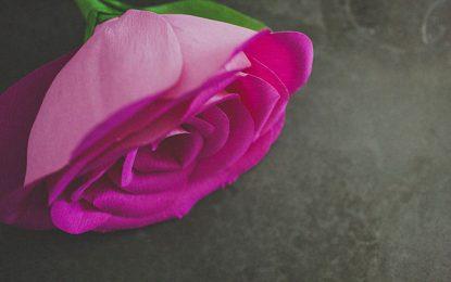 DIY: flor de papel crepé gigante