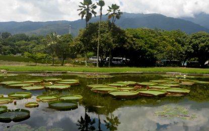 De paseo por: El Jardín Botánico